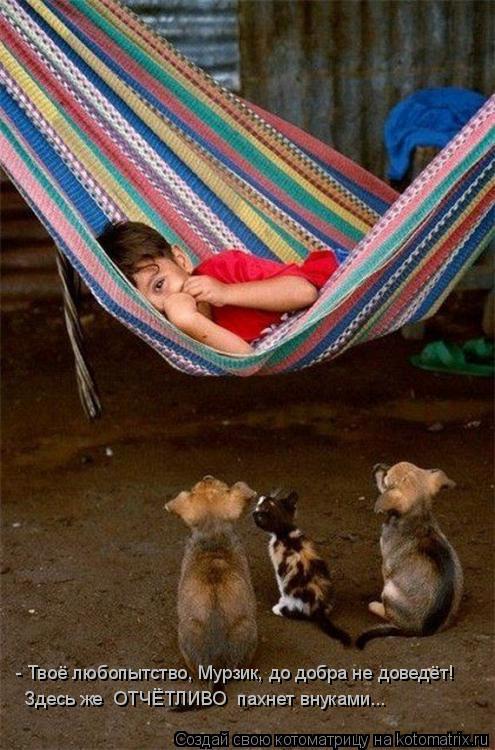 Котоматрица: - Твоё любопытство, Мурзик, до добра не доведёт! Здесь же  ОТЧЁТЛИВО  пахнет внуками...