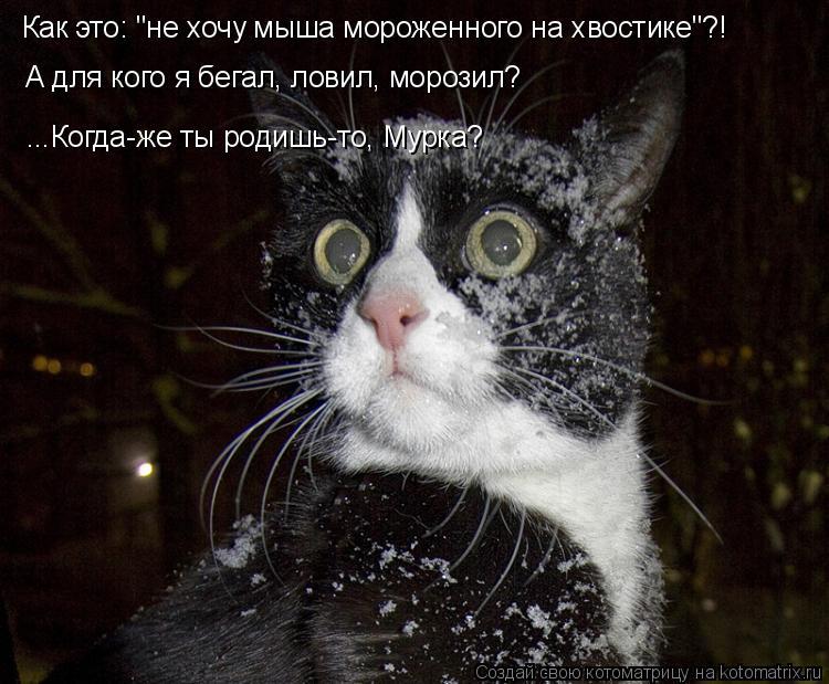 """Котоматрица: Как это: """"не хочу мыша мороженного на хвостике""""?! ...Когда-же ты родишь-то, Мурка? А для кого я бегал, ловил, морозил?"""