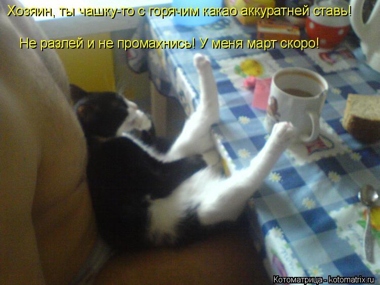 Котоматрица: Хозяин, ты чашку-то с горячим какао аккуратней ставь! Не разлей и не промахнись! У меня март скоро!