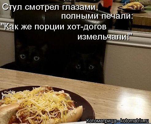 """Котоматрица: Стул смотрел глазами,  полными печали: """"Как же порции хот-догов измельчали!"""""""