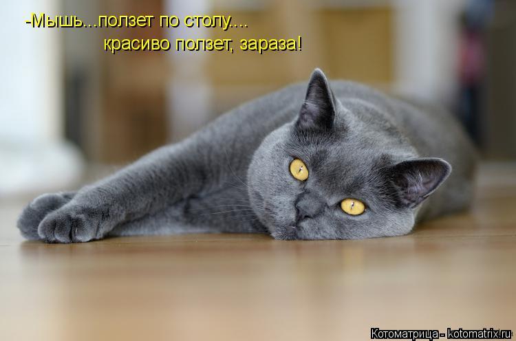 Котоматрица: -Мышь...ползет по столу.... красиво ползет, зараза!