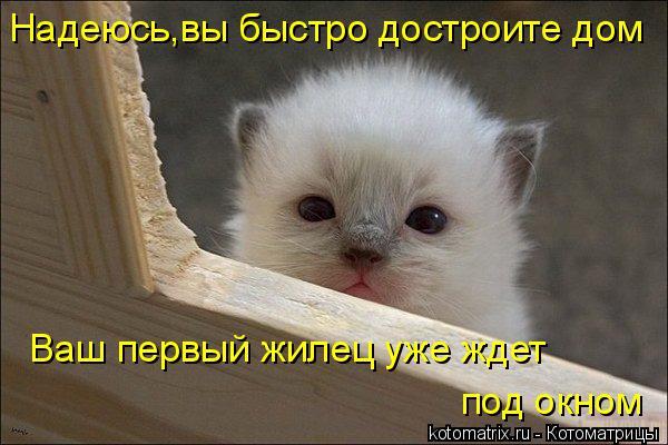 Котоматрица: Надеюсь,вы быстро достроите дом Ваш первый жилец уже ждет под окном