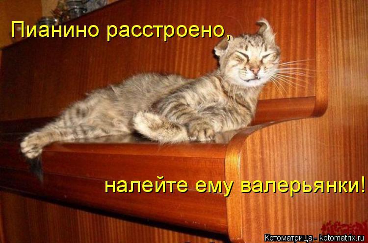 Котоматрица: Пианино расстроено,  налейте ему валерьянки!