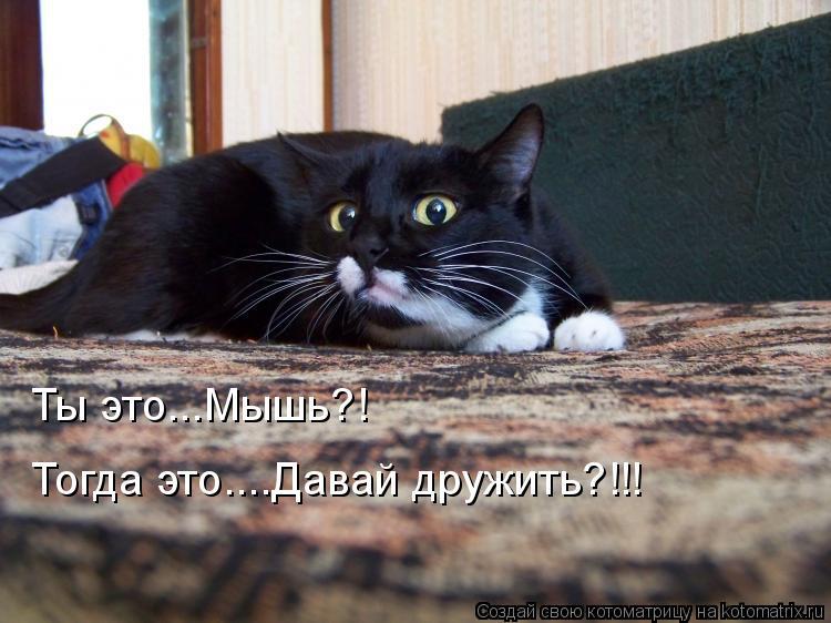Котоматрица: Ты это...Мышь?! Тогда это....Давай дружить?!!!