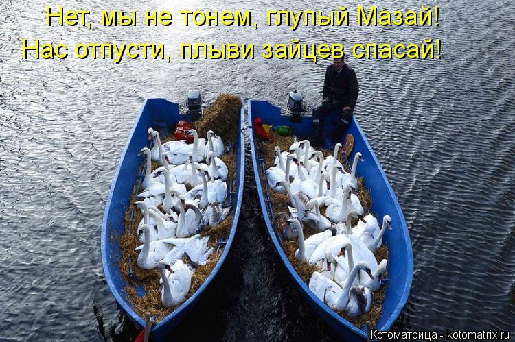 Котоматрица: Нет, мы не тонем, глупый Мазай! Нас отпусти, плыви зайцев спасай!