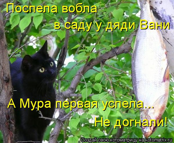 Котоматрица: Поспела вобла  в саду у дяди Вани А Мура первая успела... Не догнали!