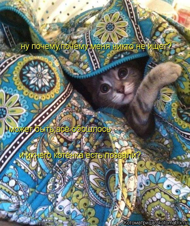 Котоматрица: ну почему,почему меня никто не ищет? может быть,всё обошлось и ихнего котёнка есть позвали?