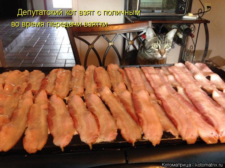 Котоматрица: Депутатский кот взят с поличным во время передачи взятки.