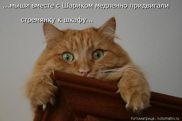 Котоматрица: ...мыши вместе с Шариком медленно придвигали стремянку к шкафу...