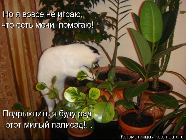 Котоматрица: Но я вовсе не играю, что есть мочи, помогаю! Подрыхлить я буду рад этот милый палисад!...