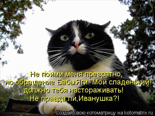 """Котоматрица: но обращение БабыЯги """"Мой сладенький!"""" Не пойми меня превратно, Не правда ли,Иванушка?! должно тебя настораживать!"""