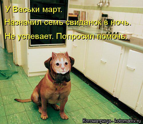 Котоматрица: У Васьки март.  Назначил семь свиданок в ночь. Не успевает. Попросил помочь.