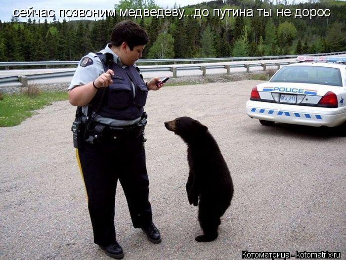 Котоматрица: сейчас позвоним медведеву...до путина ты не дорос