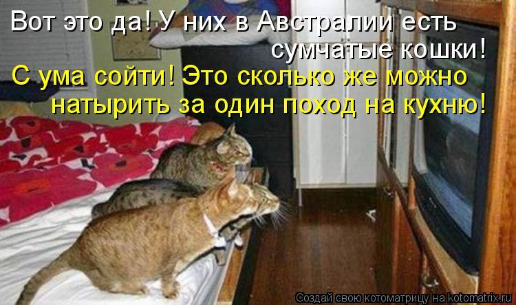 Котоматрица: Вот это да! У них в Австралии есть  сумчатые кошки! С ума сойти! Это сколько же можно натырить за один поход на кухню!