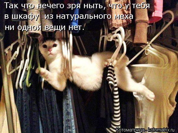 Котоматрица: Так что нечего зря ныть, что у тебя в шкафу  из натурального меха  ни одной вещи нет.