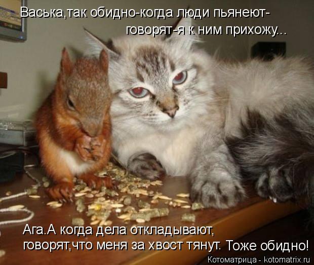 Котоматрица: Васька,так обидно-когда люди пьянеют- говорят-я к ним прихожу... Ага.А когда дела откладывают, говорят,что меня за хвост тянут. Тоже обидно!