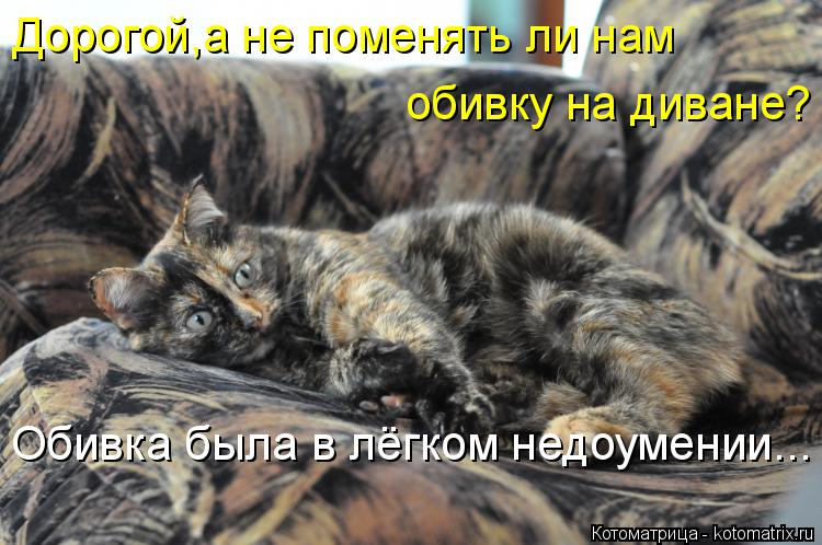 Котоматрица: Дорогой,а не поменять ли нам обивку на диване? Обивка была в лёгком недоумении...