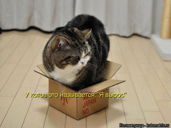 """Котоматрица: У котов это называется:""""Я вырос"""""""
