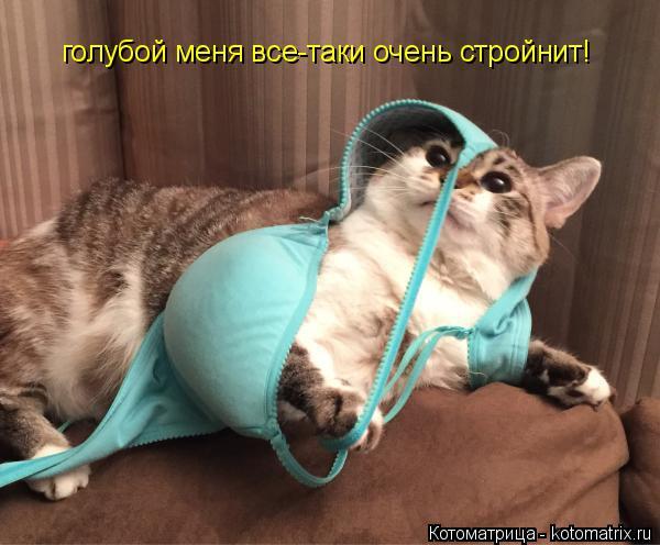 Котоматрица: голубой меня все-таки очень стройнит!