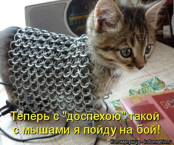 """Котоматрица: с мышами я пойду на бой! Теперь с """"доспехою"""" такой"""