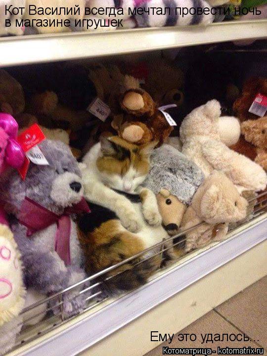Котоматрица: Кот Василий всегда мечтал провести ночь в магазине игрушек Ему это удалось...