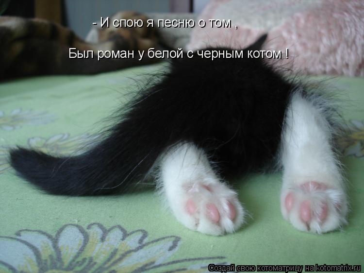 Котоматрица: - И спою я песню о том , Был роман у белой с черным котом !