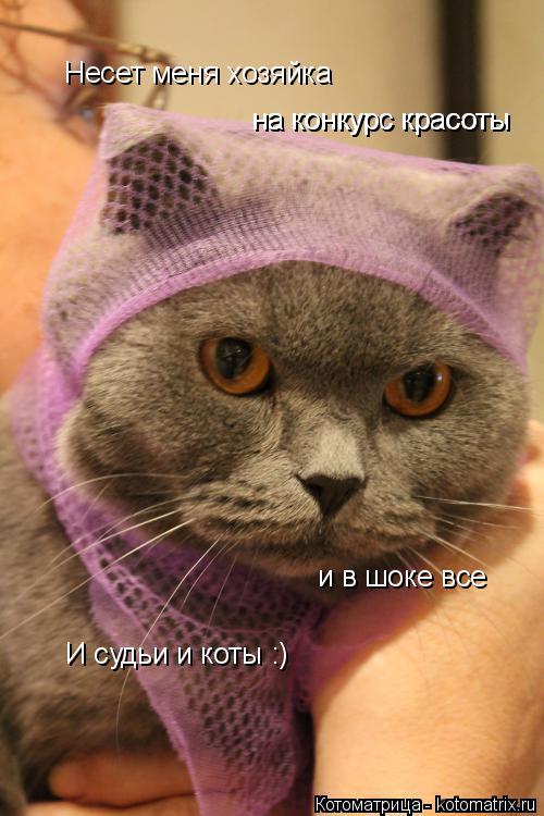 Котоматрица: Несет меня хозяйка на конкурс красоты на конкурс красоты и в шоке все И судьи и коты :)