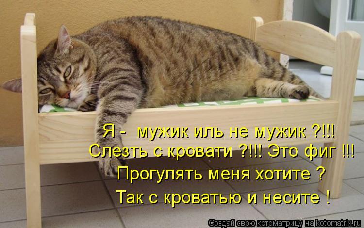 Котоматрица: Я -  мужик иль не мужик ?!!! Слезть с кровати ?!!! Это фиг !!! Прогулять меня хотите ? Так с кроватью и несите !