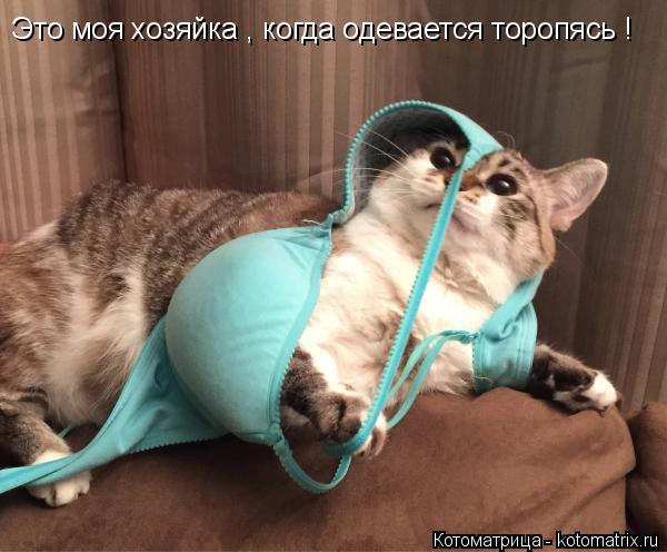 Котоматрица: Это моя хозяйка , когда одевается торопясь !