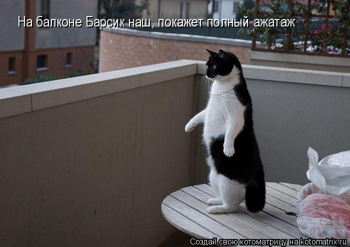 Котоматрица: На балконе Барсик наш, покажет полный ажатаж