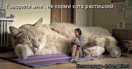 Котоматрица: Говорили мне , не корми кота растишокй
