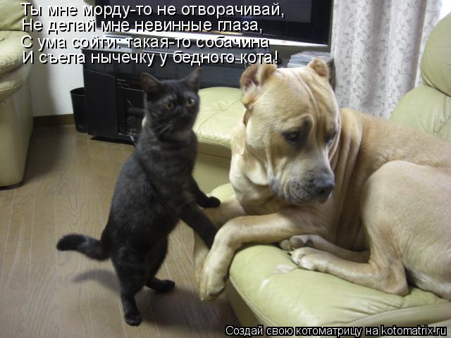 Котоматрица: Ты мне морду-то не отворачивай, С ума сойти: такая-то собачина Не делай мне невинные глаза, И съела нычечку у бедного кота!
