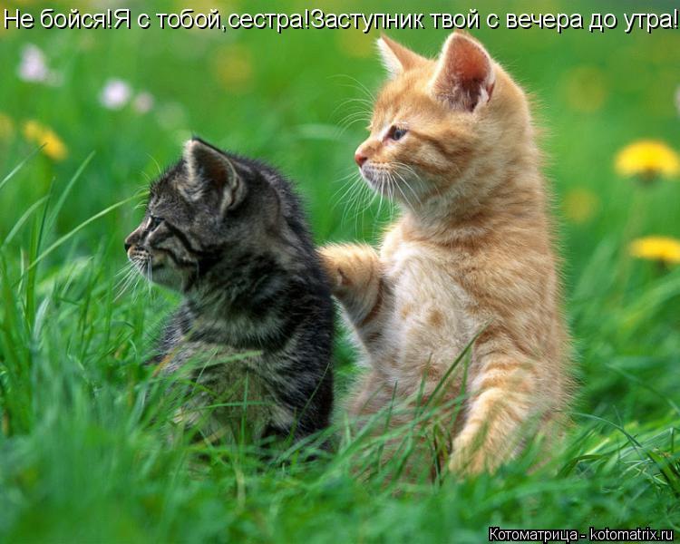 Котоматрица: Не бойся!Я с тобой,сестра!Заступник твой с вечера до утра!