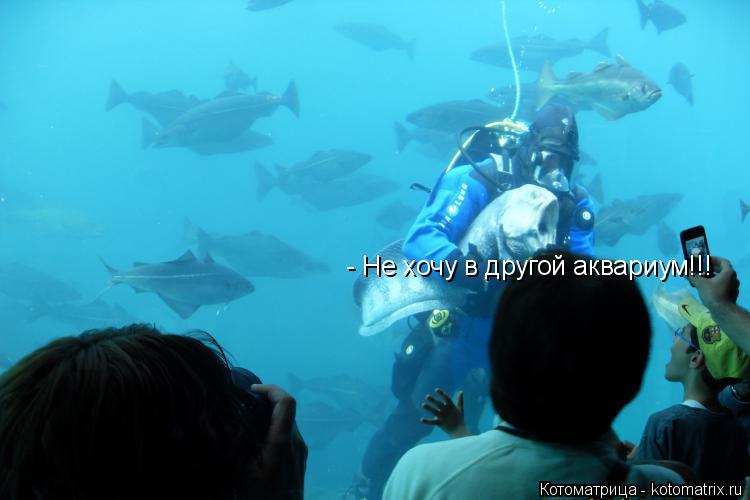 Котоматрица: - Не хочу в другой аквариум!!!