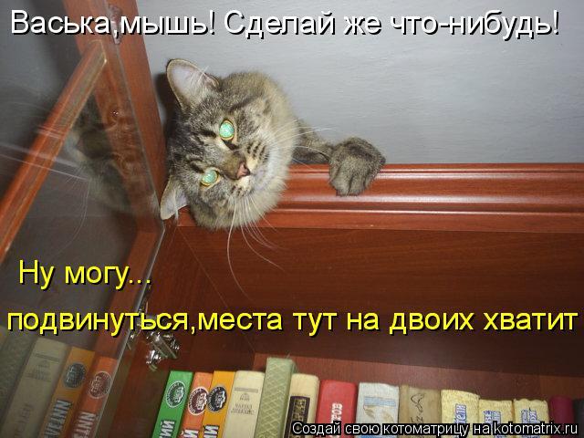 Котоматрица: Васька,мышь! Сделай же что-нибудь! Ну могу... подвинуться,места тут на двоих хватит подвинуться,места тут на двоих хватит