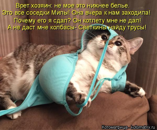 Котоматрица: Врет хозяин: не мое это нижнее белье. Это все соседки Милы! Она вчера к нам заходила! Почему его я сдал? Он котлету мне не дал! А не даст мне кол