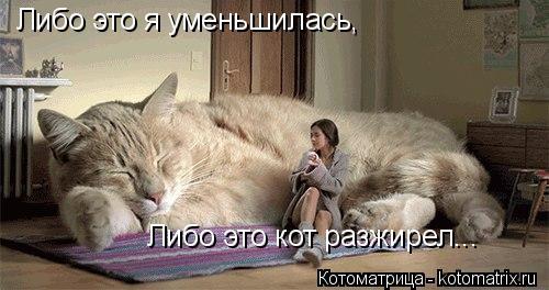 Котоматрица: Либо это я уменьшилась, Либо это кот разжирел...