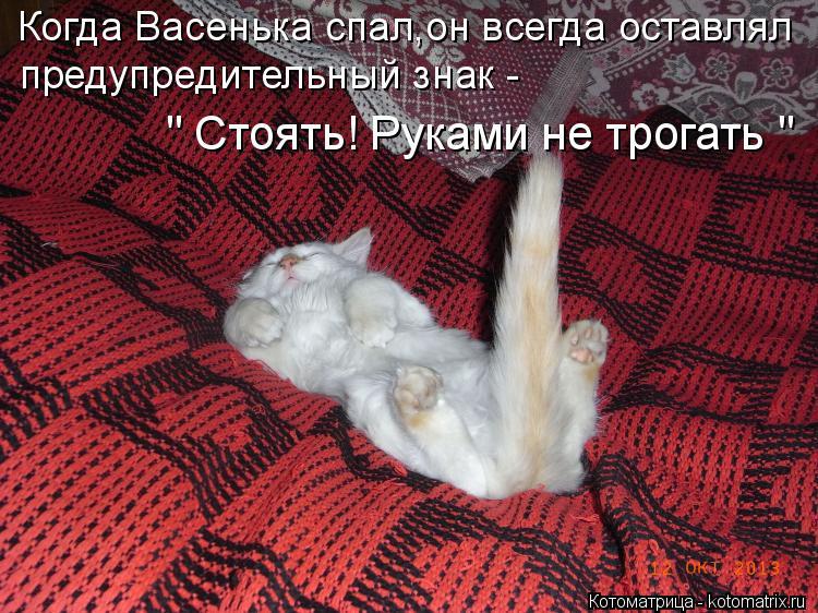 """Котоматрица: Когда Васенька спал,он всегда оставлял предупредительный знак - """" Стоять! Руками не трогать """""""