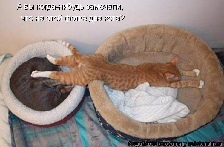 Котоматрица: А вы когда-нибудь замечали, что на этой фотке два кота?