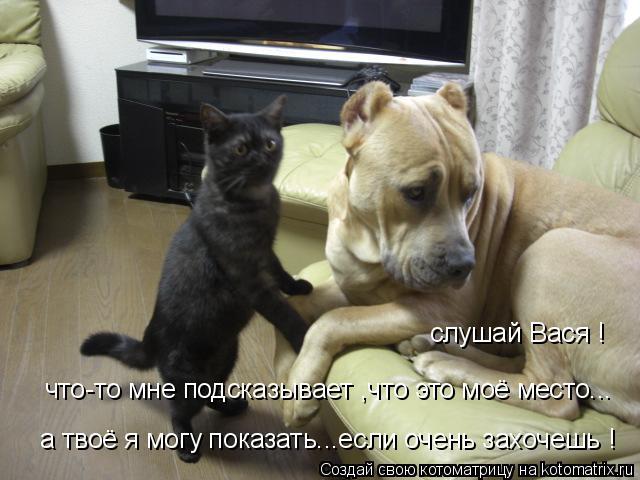 Котоматрица: слушай Вася !  что-то мне подсказывает ,что это моё место... а твоё я могу показать...если очень захочешь !