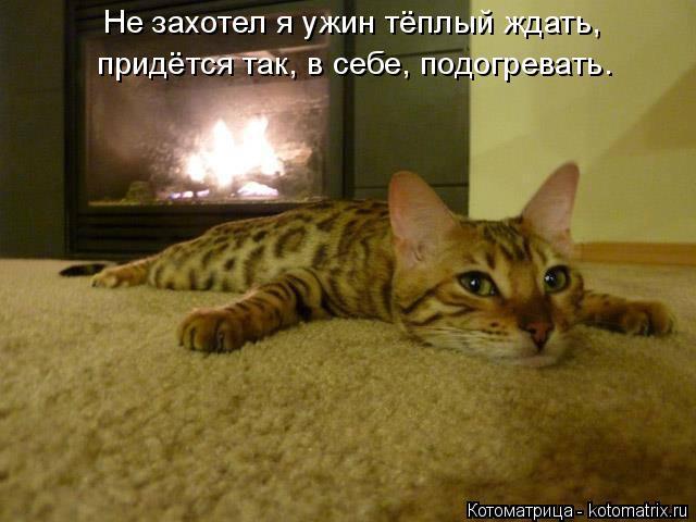 Котоматрица: Не захотел я ужин тёплый ждать, придётся так, в себе, подогревать.