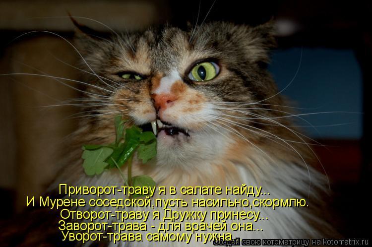 Котоматрица: Приворот-траву я в салате найду... И Мурене соседской,пусть насильно,скормлю. Отворот-траву я Дружку принесу... Уворот-трава самому нужна... За