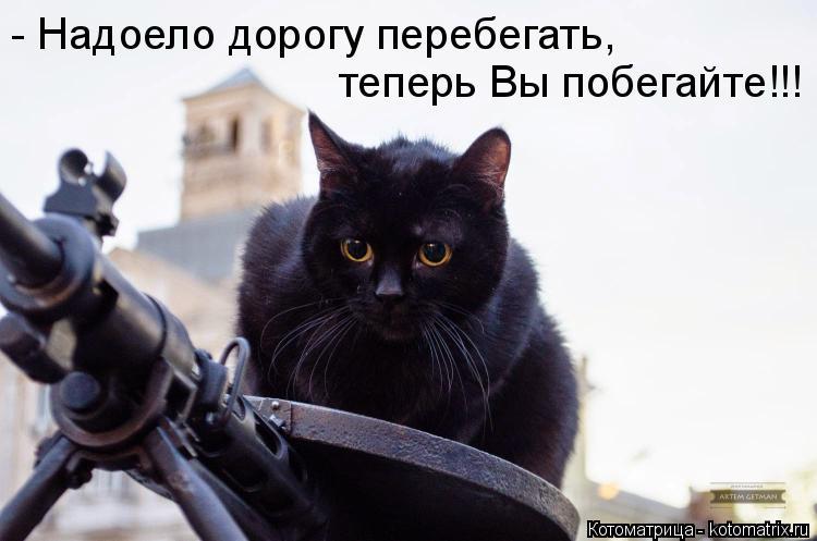 Котоматрица: - Надоело дорогу перебегать,  теперь Вы побегайте!!!