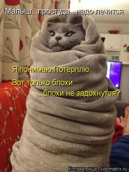 Котоматрица: Малыш...простуда...надо лечится. Я понимаю.Потерплю. Вот только блохи... ...блохи не задохнутся?
