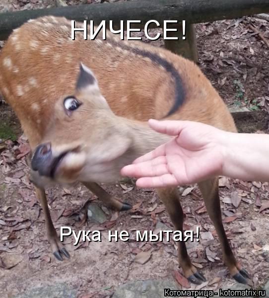 Котоматрица: Рука не мытая! НИЧЕСЕ!