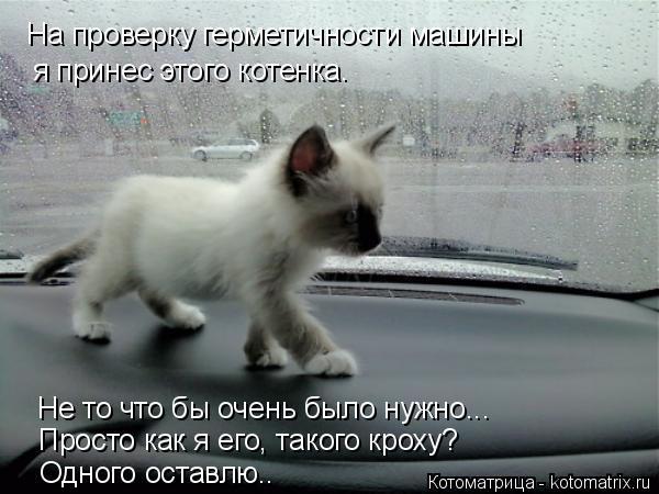 Котоматрица: На проверку герметичности машины я принес этого котенка. Не то что бы очень было нужно... Просто как я его, такого кроху? Одного оставлю..