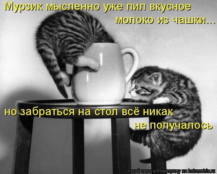Котоматрица: Мурзик мысленно уже пил вкусное молоко из чашки... но забраться на стол всё никак не получалось