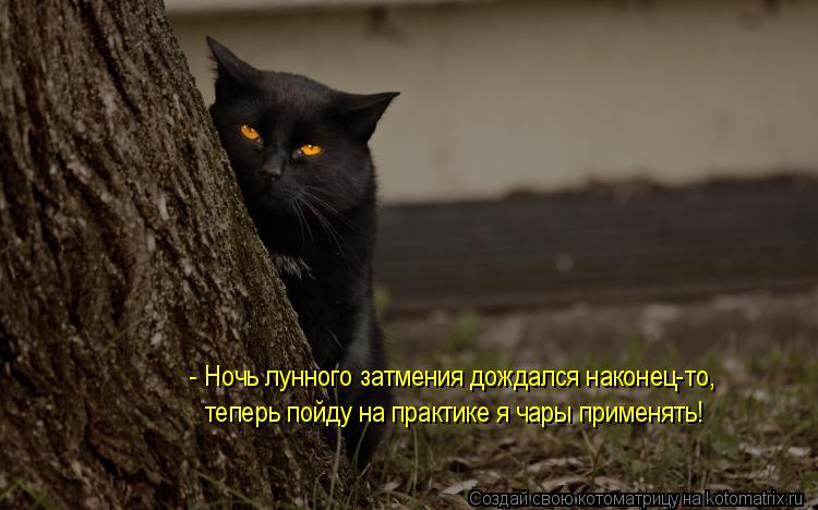 Котоматрица: - Ночь лунного затмения дождался наконец-то, теперь пойду на практике я чары применять!