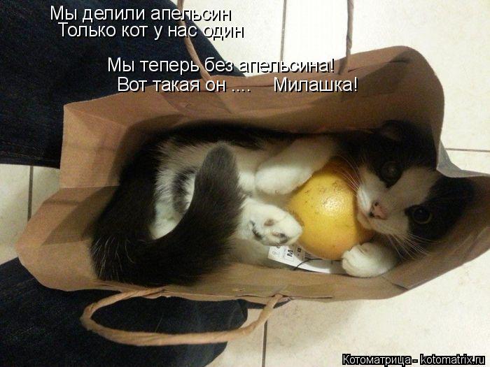 Котоматрица: Мы делили апельсин Только кот у нас один Мы теперь без апельсина! Вот такая он ....    Милашка!