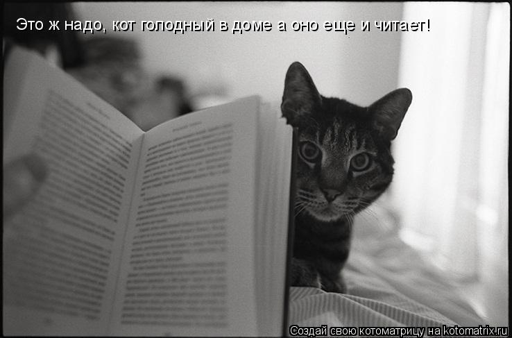 Котоматрица: Это ж надо, кот голодный в доме а оно еще и читает!